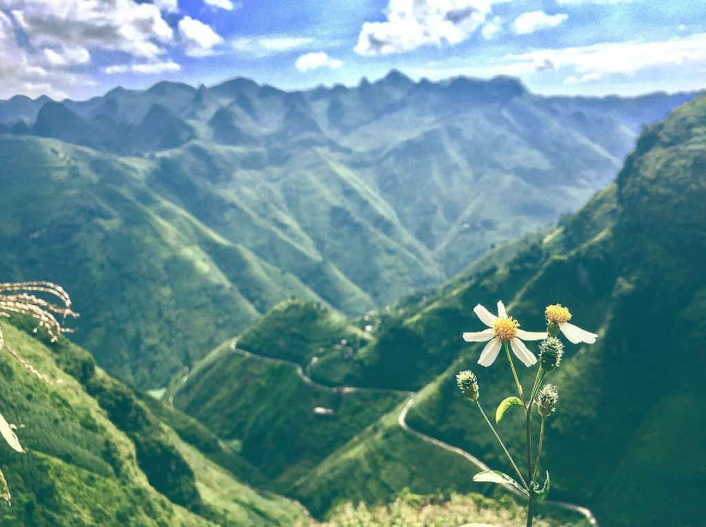 A view of Ha Giang, on the border of China and Vietnam. Green mountains in the background with blue sky and clouds. IN the foreground a winding mountain pathway but right in front, a daisy in hyper focus.